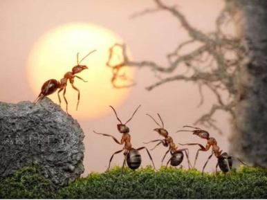 las-hormigas-arrieras-expotita-1-638